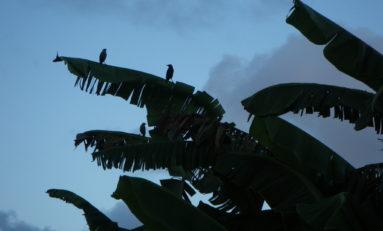 Conférence de presse du collectif contre l'épandage aérien en Martinique