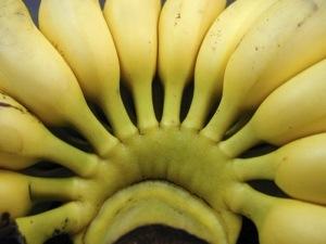 Suspension de l'#épandage aérien  Le #Medef apporte son soutien à la filière #banane