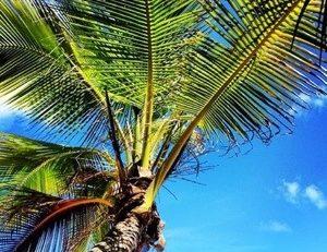Le Club Med les Boucaniers en #Martinique sommé de rembourser 12 millions d'euros