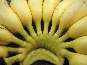 Les écologistes ont la #banane en #Martinique
