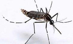 Deux cas de #chikungunya confirmés en #Martinique
