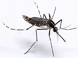 #Chikungunya en #Martinique : face à l'épidémie, la mobilisation de chacun est indispensable