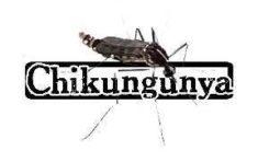 #Dengue/ #Chikungunya : La #Martinique invente la post prévention