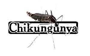 #Dengue/ #Chikungunya : La #Martinique invente la post prévention