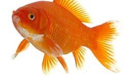 Ministère des Outremers qui ment ? Le piment ? Le poisson ou le letchi ?
