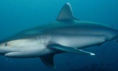 Un #requin attaque un #surfeur à Saint-Leu à l'île de La #Réunion