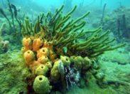 Chronique d'un crime écologique annoncé en #Martinique
