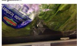 La salade Iceberg...ça me laisse de glace
