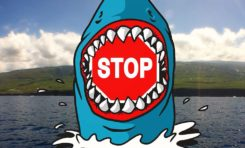 La phrase du jour (17/04/15) #lareunion #requin