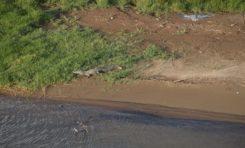 A la poursuite du diamant vert ...oups...du #crocodile Dundee en #Martinique