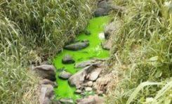 Hier la ravine coulait en magenta...aujourd'hui elle coule en vert