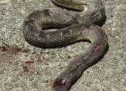 Les serpents ne font pas grève sur l'habitation Fixy en Martinique