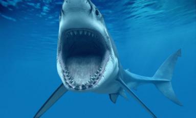 Attaque de requin à Boucan Canot à l'île de La Réunion