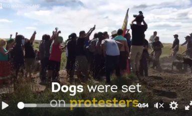 USA : ils lâchent les chiens sur les Amérindiens (vidéo)