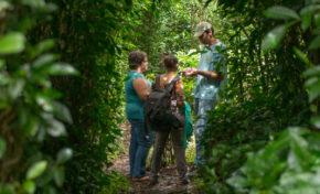 Le Labyrinte en-champ-thé : A la découverte du thé et du géranium made in Réunion - Journées Européennes du Patrimoine à la Réunion