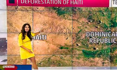 """""""En Haïti même les enfants ont mangé les arbres"""" (pétition)"""