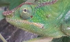 Les yeux dans les yeux avec un endormi à l'île de La Réunion