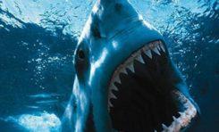 Faut-il déclarer la guerre aux requins à l'île de La Reunion ?