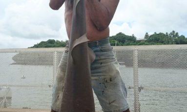 Capture d'un bébé requin à l'île de La Réunion...Et si la solution venait de la Guyane ?