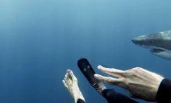 Survivant d'une attaque, défenseur des requins (photo)