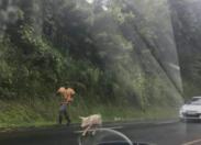 Balance ton porc...la Martinique change de braquet
