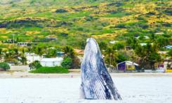 Images du jour 31/10/17 - Baleines - île de La Réunion