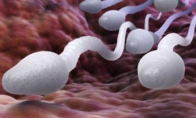 Les Brésiliens importent de plus en plus de sperme américain pour avoir des enfants blancs