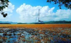 L'image du jour 28/04/18 - Martinique - Sargasses