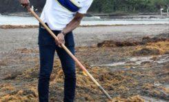 Martinique : Nestor Azérot ramasse les algues sargasses sans Jean-Philippe Nilor
