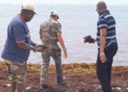 Sargasses à Sainte-Anne en Martinique : Jean-Michel Gémieux prend les choses en main