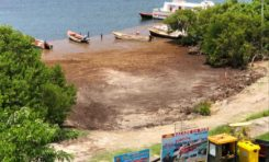 Les algues sargasses à Cap Che c'est chaud