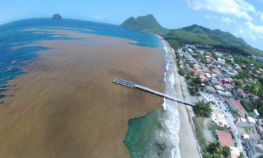 Images du jour 16/06/18 - Martinique - Diamant - Algues sargasses - Nicolas Hulot