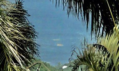 Les algues sargasses arrivent sur la côte caraïbe en Martinique