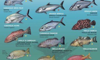 Entre poisons et poissons...pas étonnant que le corps déconne en Martinique et en Guadeloupe
