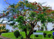 L'image du jour 15/10/18 - Martinique - Flamboyant