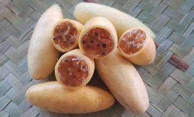L'image du jour 16/01/19 île de La Réunion - Banane passion