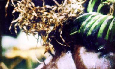 Chlordécone: Les Hayot, instigateurs des compromissions de l'audiovisuel public