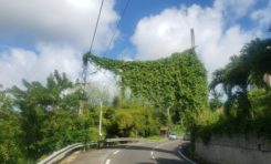 Le développement durable marche sur un fil en Martinique