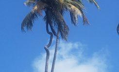 L'image du jour 03/01/20 - Martinique