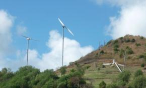 Découverte de trois débroussailleuses géantes en Martinique