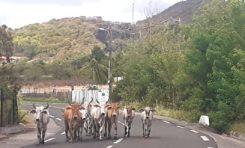 L'image du jour 08/06/20 - Vauclin - Martinique