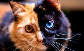L'image du jour 30/11/20 - Chat beau t'es