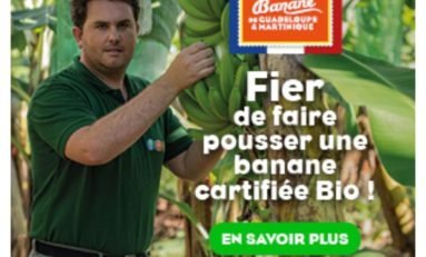 """La Guadeloupe et la Martinique sont fières de faire pousser une BANANE """"cartifiée"""" Bio !"""