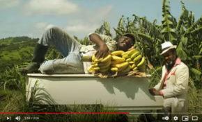 """La banane de Martinique : """"il faut la respecter"""" (disent-ils)... [vidéo-clip]"""
