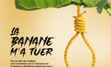 """""""La banane m'a tuer""""...la nouvelle récolte..."""