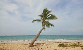 l'image du jour 14/04/21 - Anse à prunes - Sainte-Anne - Martinique
