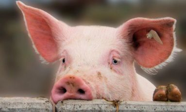 Scandale en Martinique : Madivial...ça va sentir le caca cochon